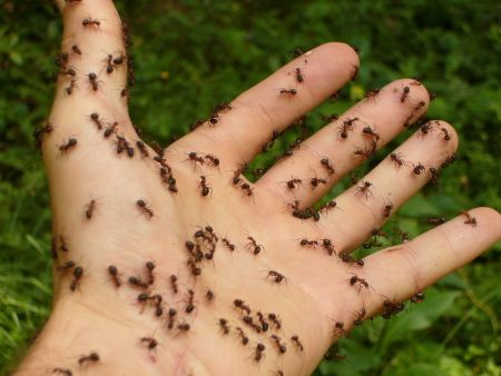 ants crawling on hand